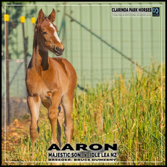 Majestic Son colt out of Idle Lea NZ
