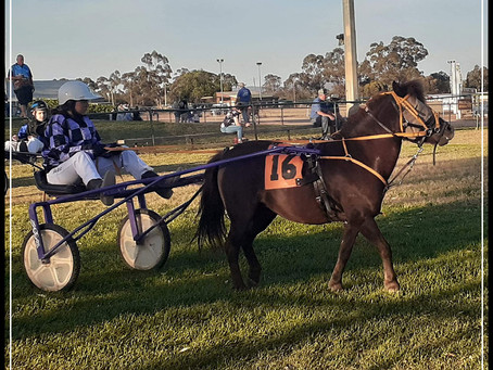 Riverina Mini Trots at Temora