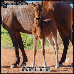 For A Reason filly out of champion mare Chip and Gale