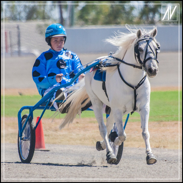 Retiring NSW Mini Trot Driver 2020   Brooke Harris
