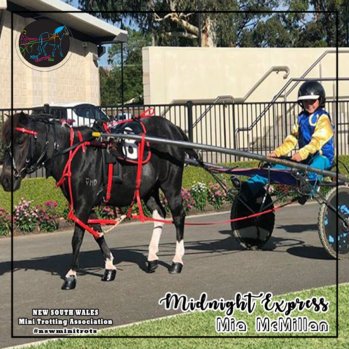 Midnight Express will be driven by Mia McMillan in the midget division of Mini Trots Inter Dominion 2018 to be held at Melton Victoria on 15 December 2018.  NSW Mini Trotting Association (NSWMTA) and Harness Racing New South Wales (HRNSW) supports the members that would be competing in the Mini Trots Inter Dominion 2018.