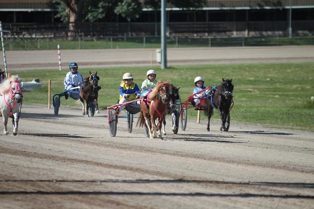 Canberra Mini Trotting Club