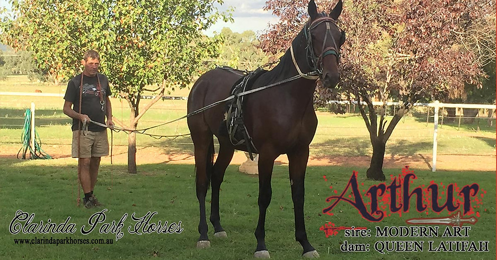 "Clarinda Park Horses. ""Arthur"" colt by Modern Art and Queen Latifah"