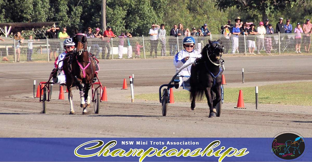 Top of the straight in Champion of Champion events with Bobby Bouche (right) and Velvets Little Star down (left). NSW Mini Trots Championship 2017.