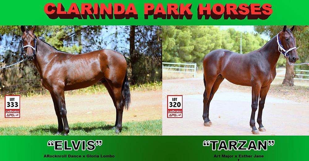 Clarinda Park Horses APG Sydney Yearling Sale 2017