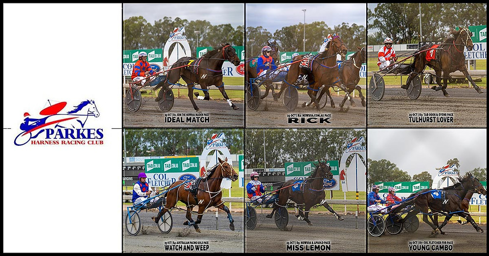 PARKES HARNESS Racing Club winners - 25 Oct 2020 - IDEAL MATCH - RICK - TULHURST LOVER - WATCH AND WEEP - MISS LEMON - TORO DELAGO NZ - YOUNG CAMBO - ROCK ON NZ