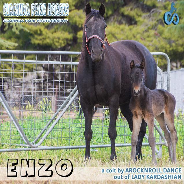 Horse Foals Photo 2018  - a Arocknroll Dance colt out of Lady Kardashian