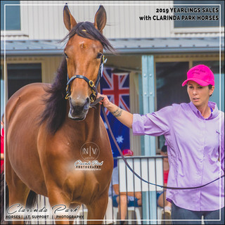2019 Bathurst Gold Crown Yearlings Sale - MACARENA, a filly by Bacardy Lindy out of Makarewa Lil NZ