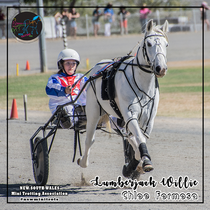 Lumberjack Willie will be driven by Chloe Formosa in the Ponies division of Mini Trots Inter Dominion 2018 to be held at Melton Victoria on 15 December 2018.  NSW Mini Trotting Association (NSWMTA) and Harness Racing New South Wales (HRNSW) supports the members that would be competing in the Mini Trots Inter Dominion 2018.