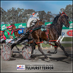 TULHURST TERROR driven by David McKenzie  at the Parkes Trots