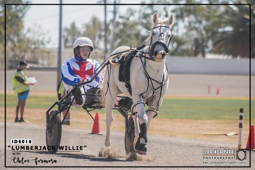 Mini Trots Inter Dominion 2018 - NSW Mini Trots Pony Division Representative - Chloe Formosa driving Lumberjack Willie