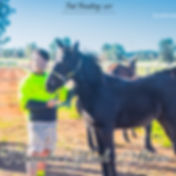 Clarinda Park Horses takes care of your horses by foal handling them regularly