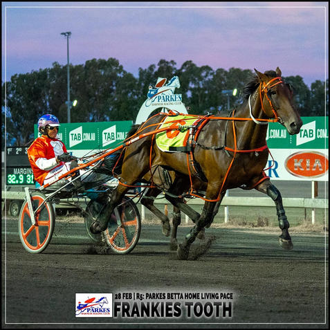 FRANKIES TOOTH, driven by Nathan Turnbull, won at the Parkes Trots