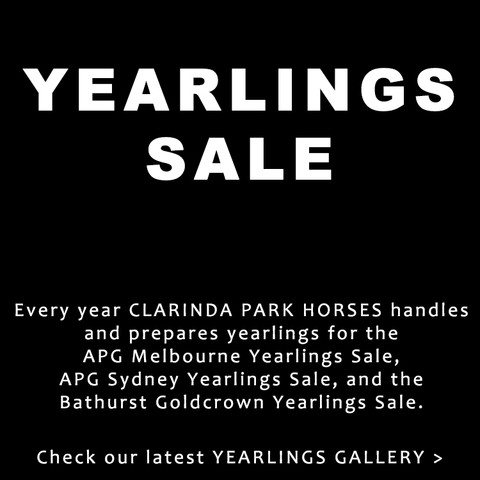 Yearlings Sale with Clarinda Park Horses