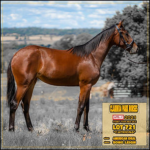 APG Sydney Yearlings 2021 - Lot 721 - CATRIONA - American Ideal x Soho Leigh