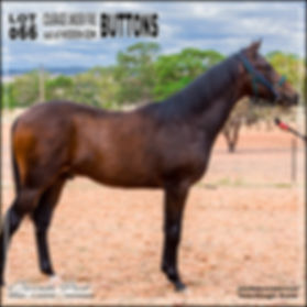 2019 Bathurst Gold Crown Yearlings Sale. Lot 66 (Courage Under Fire x Hidden Gem)