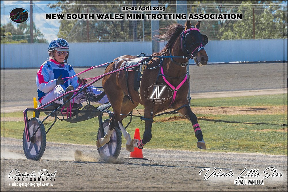 Ponies Champion Grace Panella with Velvets Little Star during the NSW Mini Trots Championships 2019