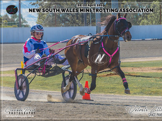 Grace Panella driving Velvets Little Star - Pony Champion