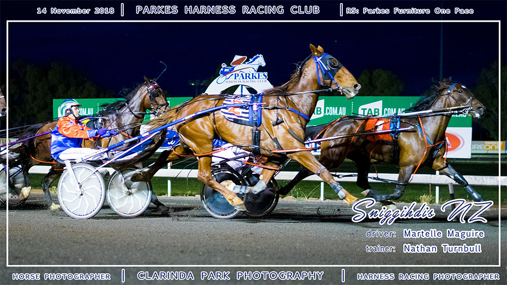 Parkes Harness | 14 November 2018 | Race 5 Parkes Furniture One Pace winner | Sniggihdis NZ | Harness Racing Photos | Horse Photographer | Clarinda Park Photography