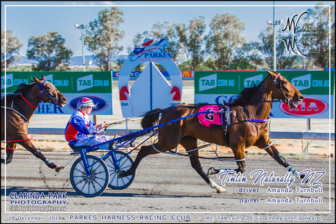 Race 1 - TAB com au Elvis Championship Heat 1 - 03 - Website Uploads - TINTIN NATURALLY NZ - Amanda Turnbull - 001
