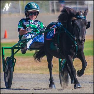 Retiring NSW Mini Trot Driver 2020   Mason Beresford