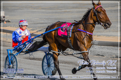 Race 1 - TAB com au Elvis Championship Heat 1 - 03 - Website Uploads - TINTIN NATURALLY NZ - Amanda Turnbull - 002