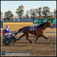 13 NOVEMBER 2019 - Parkes Harness Racing Club Race Meeting - Cathy Brown NZ driven and trained by Amanda Turnbull