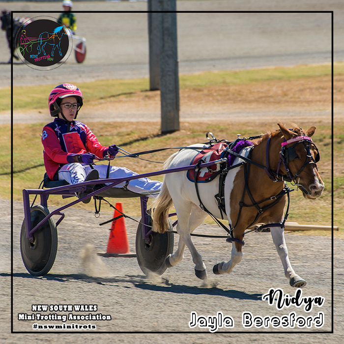 Nidya will be driven by Jayla Beresford in the Shetland division of Mini Trots Inter Dominion 2018 to be held at Melton Victoria on 15 December 2018.  NSW Mini Trotting Association (NSWMTA) and Harness Racing New South Wales (HRNSW) supports the members that would be competing in the Mini Trots Inter Dominion 2018.