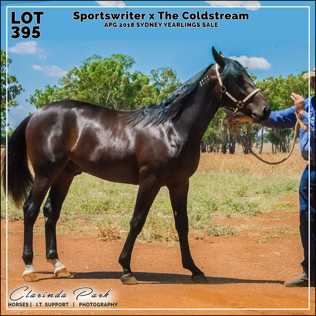 APG 2018 Sydney Yearlings Sale - Lot 395 - Sportswriter x Our Super Party