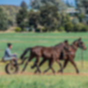 Clarinda Park Horses Services. Aside from breeding in and foaling down services of broodmares, Clarinda Park Horses offers Breaking In services for your race horses.