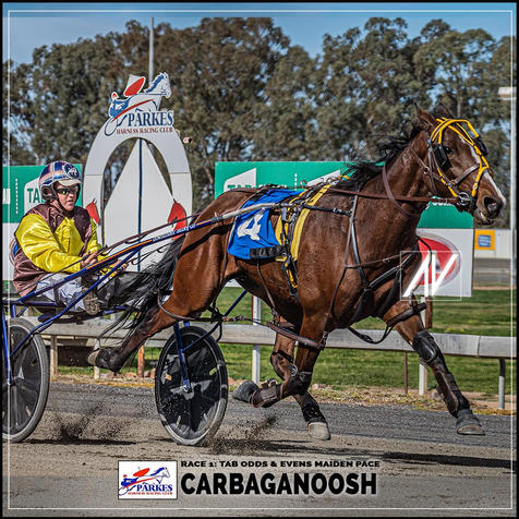CARBAGANOOSH driven by Justin Reynolds at the Parkes Trots