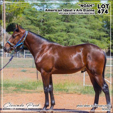 2019223 CLARINDA PARK HORSES - Yearling Sale 2019 - APG 2019 - Noah - 3rd Bath - 009