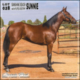 2019 Bathurst Gold Crown Yearlings Sale. Lot 28 (Sunshine Beach x Lifes Destiny)