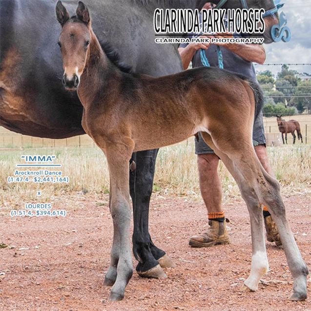 "Horse Foals Photo 2017 - ""IMMA"" - Arocknroll Dance x Lourdes"