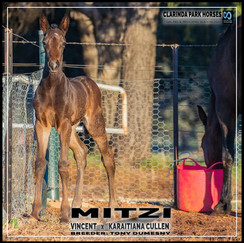 Vincent filly out of Karaitiana Cullen