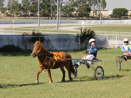 Traditional night at the Albury trots a surefire way to welcome in 2016