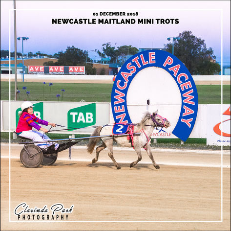 01 DECEMBER 2018 - Newcastle Maitland Mini Trots