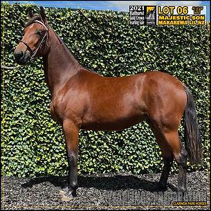 Gold Crown Bathurst Yearlings Sale 2021 - Lot 6 - Majestic Son x Makarewa Lil NZ