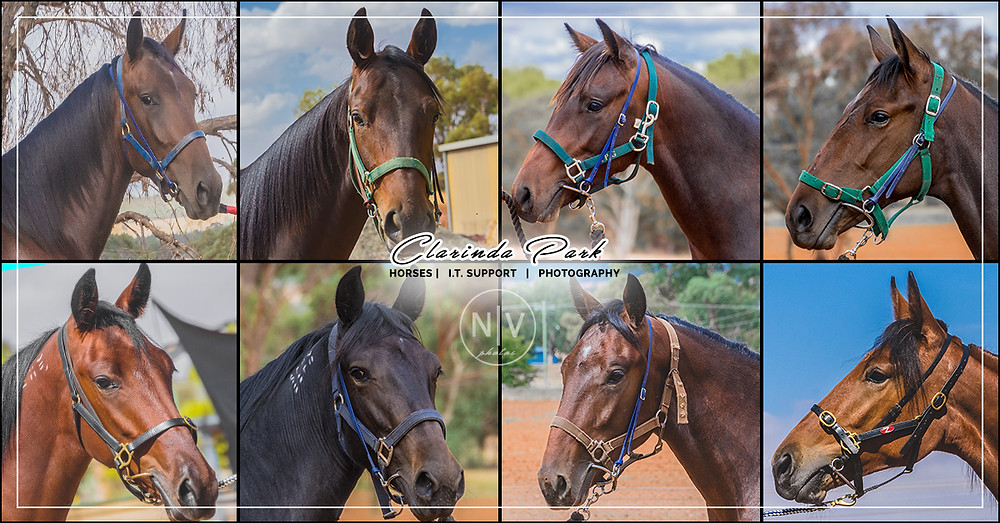 Clarinda Park Horses presents the Yearlings Draft for the 2019 Bathurst Gold Crown Yearlings Sale