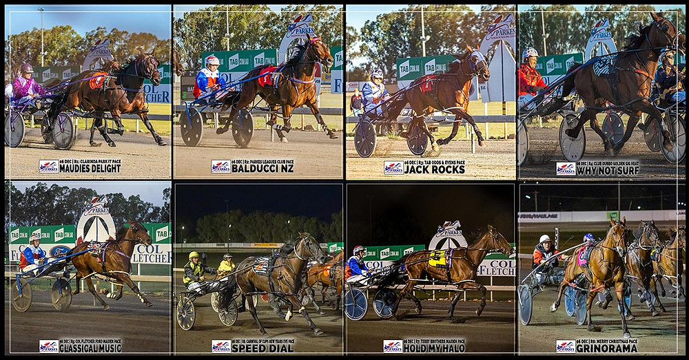 PARKES HARNESS - MAUDIES DELIGHT - BALDUCCI NZ - JACK ROCKS - WHY NOT SURF - CLASSICAL MUSIC - SPEED DIAL - HOLD MY HALO - GRINORAMA