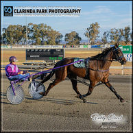15 SEPTEMBER 2019 - Parkes Harness Racing Club Race Meeting - BOBBY STREET driven and trained by Mark Hewitt at Parkes Trots