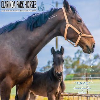 """Horse Foals Photo 2017 - """"FAYE"""" - Courage Under Fire x Tanamay"""