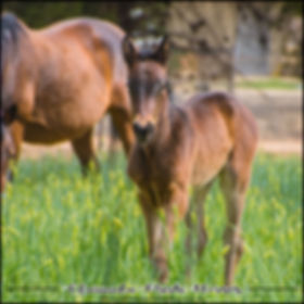 """BECKY"", a filly by Sunshine Beach and Chip and Gale, was born during the Horse Breeding Season 2018."