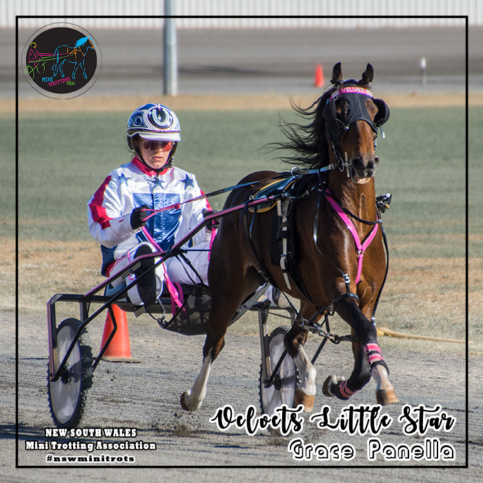 Velvets Little Star will be driven by Grace Panella in the Ponies division of Mini Trots Inter Dominion 2018 to be held at Melton Victoria on 15 December 2018.  NSW Mini Trotting Association (NSWMTA) and Harness Racing New South Wales (HRNSW) supports the members that would be competing in the Mini Trots Inter Dominion 2018.