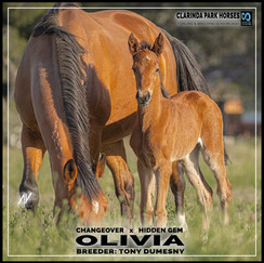 Changeover filly out of Hidden Gem