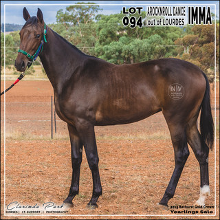 2019 Bathurst Gold Crown Yearlings Sale - Lot 094