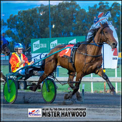 MISTER HAYWOOD, driven by Tom Pay, wins at Parkes Trots