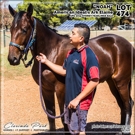 2019223 CLARINDA PARK HORSES - Yearling Sale 2019 - APG 2019 - Noah - 3rd Bath - 011