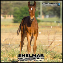 Sweet Lou colt out of Ark Elaine