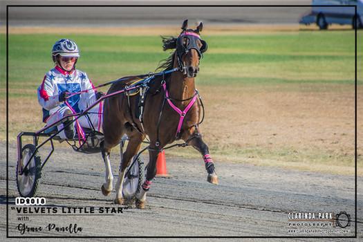 Mini Trots Inter Dominion 2018 - NSW Mini Trots Pony Division Representative - Grace Panella driving Velvets Little Star